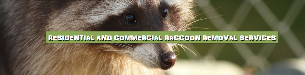 Emergency Raccoon Removal and Control 502-553-7622